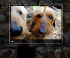 半透明がいい感じのクールな写真ギャラリー作成用jQueryプラグイン「jPhotoGrid」 fig.1